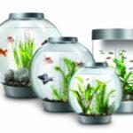 forms_aquariums13