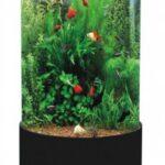 forms_aquariums4