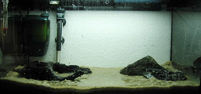 аквариум для начинающих