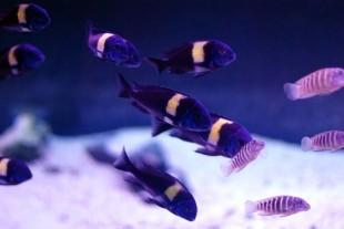 Как выбрать аквариумных рыбок