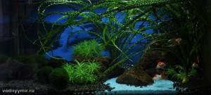 50 литров аквариум