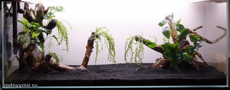 Как сажать аквариумные растения без корней 52