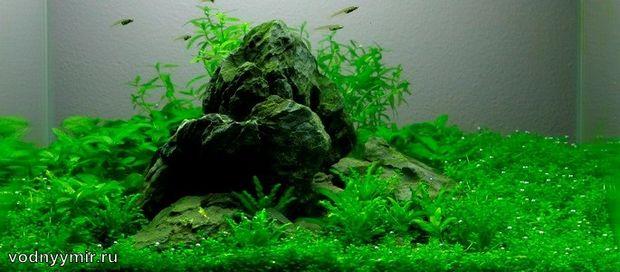 нано аквариум своими руками