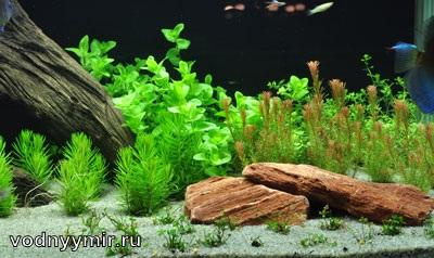 декорирование аквариума