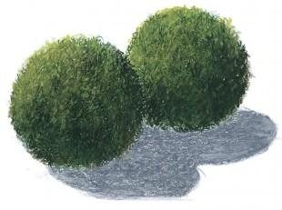 Эгагропила