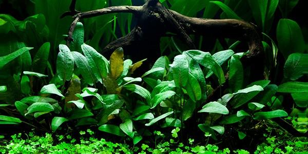 голландский аквариум