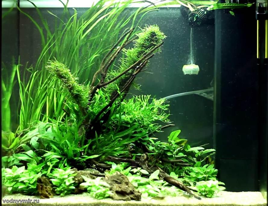 4к аквариум