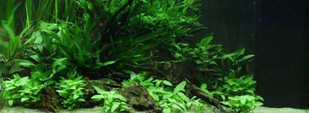 оформление аквариума 120 литров