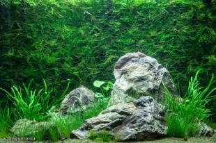 Оформление аквариума своими руками