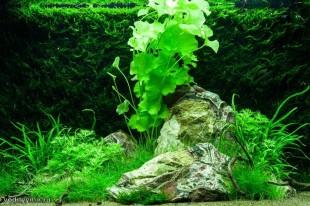 Оформление аквариума на 100 литров