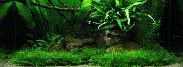 Оформление аквариума 100 литров