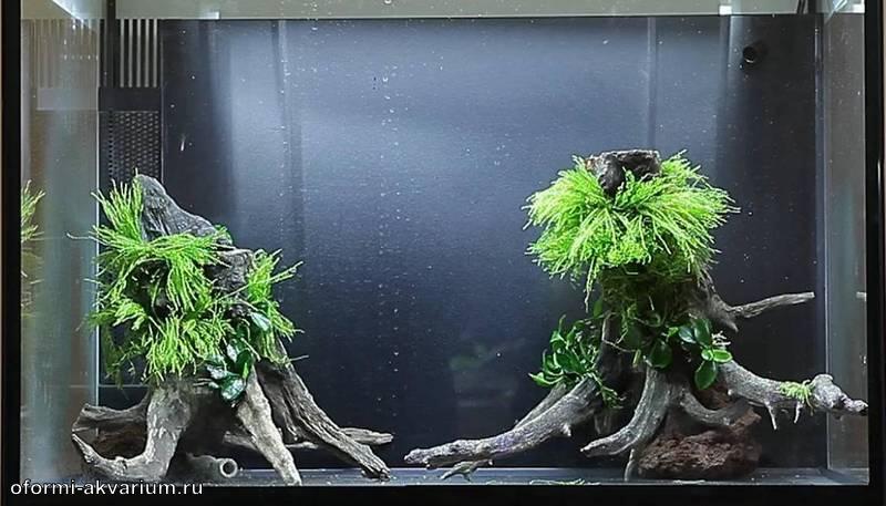 100 литровый аквариум
