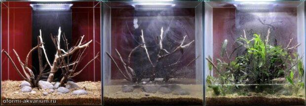 Оформление аквариума своими руками (46L) 4-6