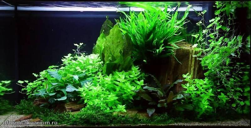 дизайн аквариума фото 60 литров