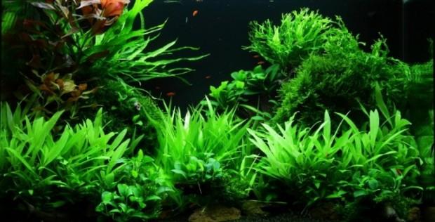 Оформление аквариума на 100 литров от Dan Crawford