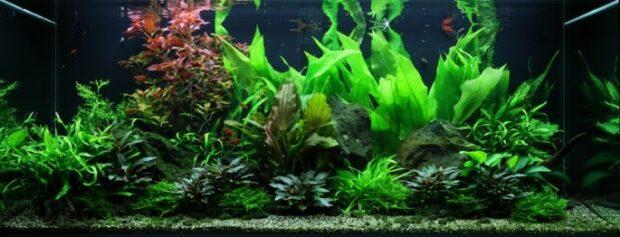Оформление аквариума на 300 литров