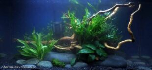 оформление аквариума 50 литров