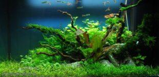 дизайн пресноводного аквариума
