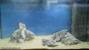 варианты оформления аквариумов