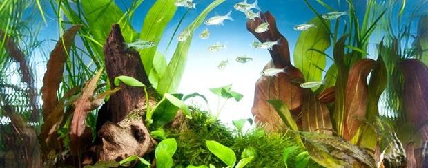 аквариум 25 литров