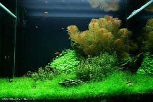 интерьер аквариума