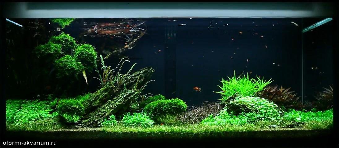 Оформление аквариумов своими руками видео