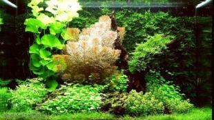 дизайн аквариума на 100 литров