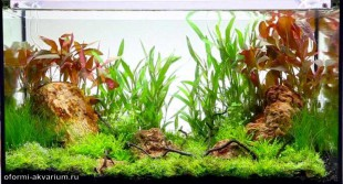 интерьер аквариума 35 литров