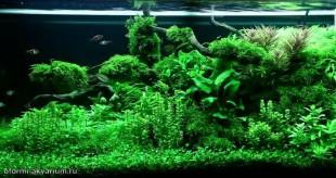 декор аквариума своими руками