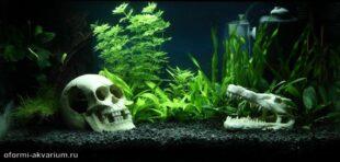 вариант оформления аквариума