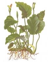 Смотреть альбом Теплолюбивые растения