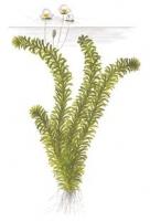 Смотреть альбом Быстрорастущие растения